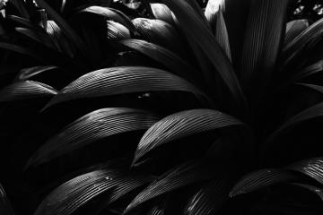 _MG_9611-Editar
